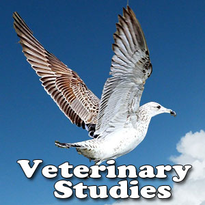 Veterinary Studies in India